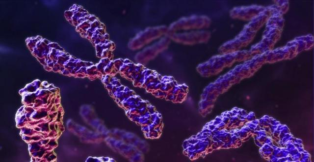 Quantos cromossomas?